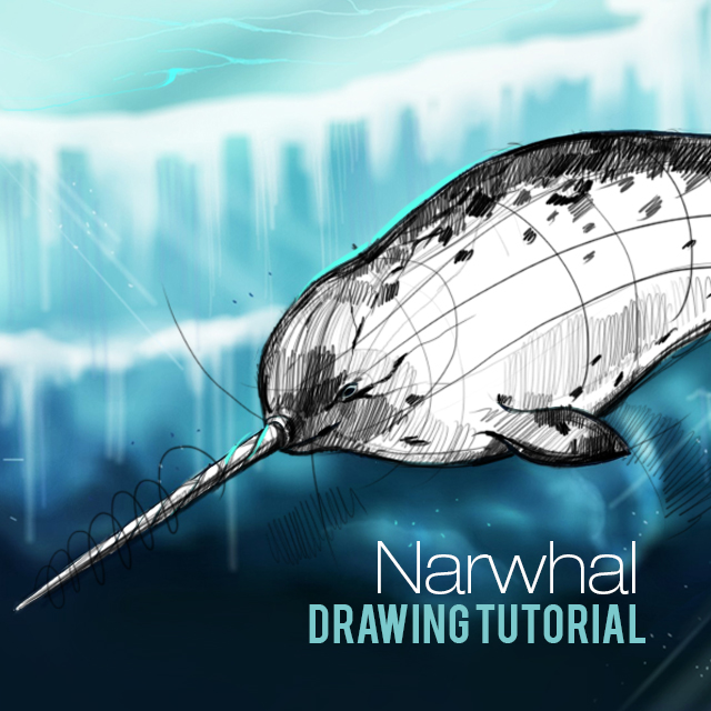 how to draw a narwhal step by step