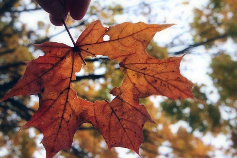 Der Herbst ist der Frühling des Winters🍃