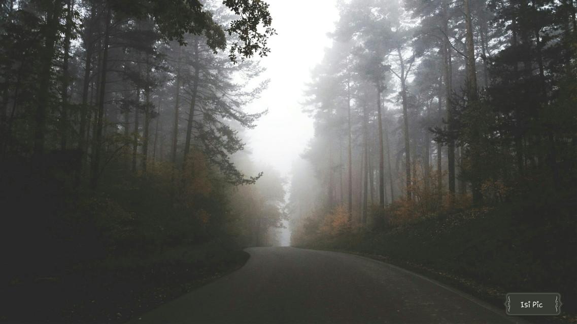 #herbst#nature#nebel
