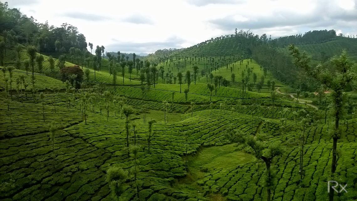 Valparai,India