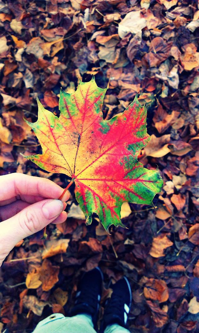 #colorful #colorsplash #love #nature #autumn