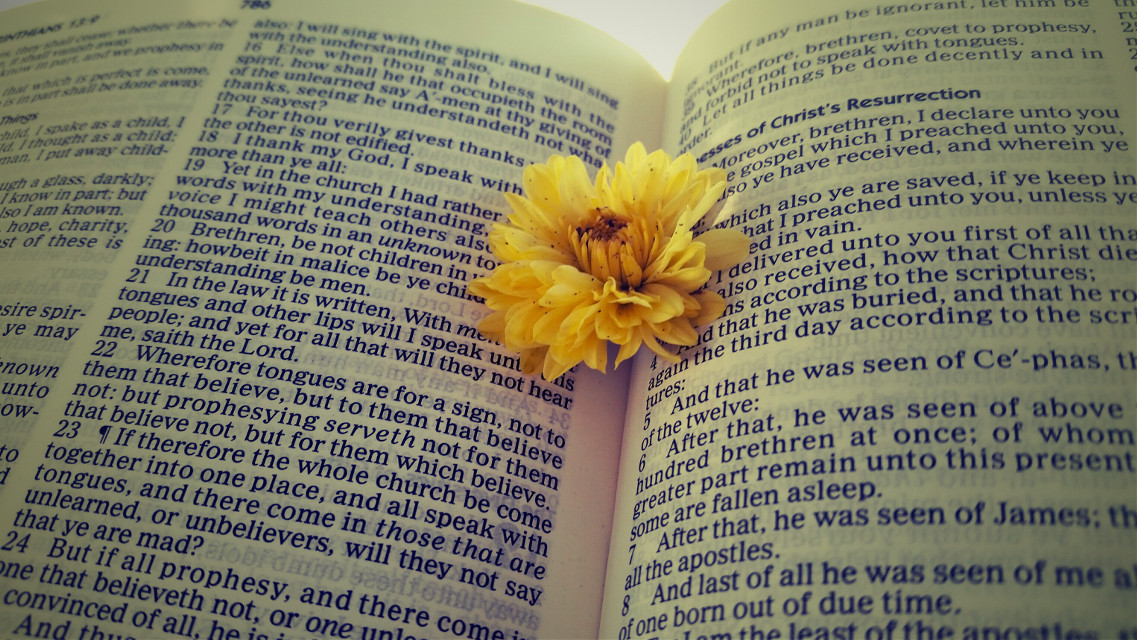 #colorful #flower #love  #bible #book #reading