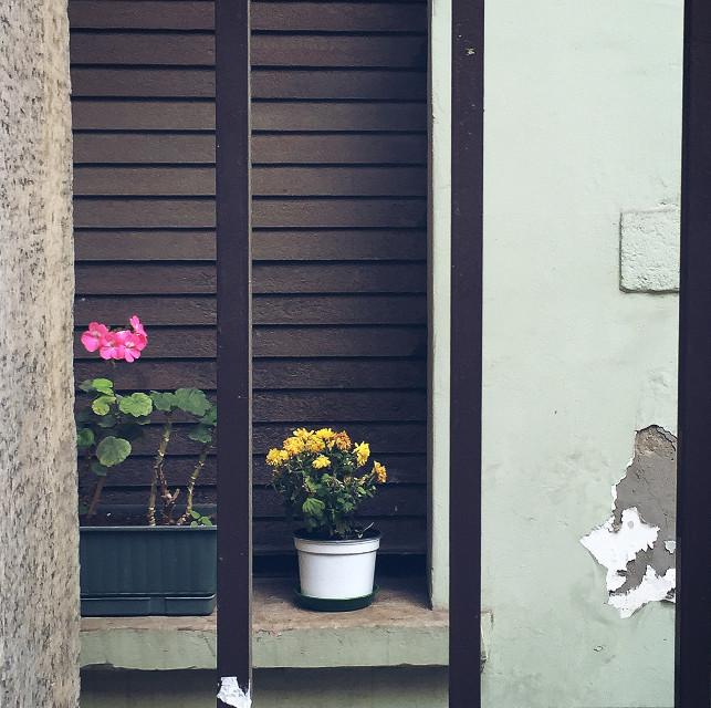 Why? 🎶  #emotions #flower #dodgereffect #flowerpot #istanbul