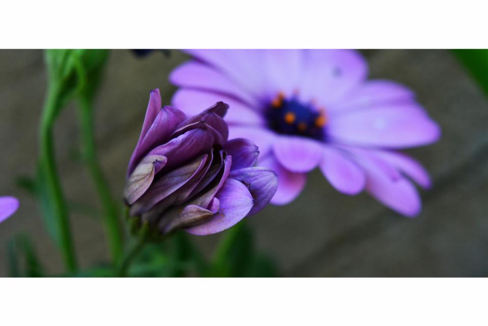 #flower #colour