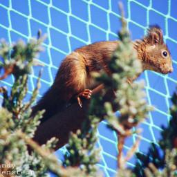 squirrel photography petsandanimals tree cute