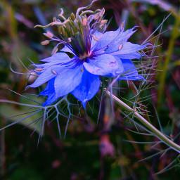 lomoeffect seasons nature photography