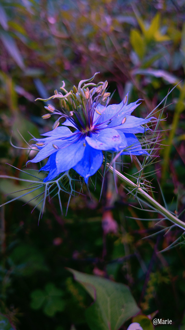 #lomoeffect  #seasons  #nature #photography