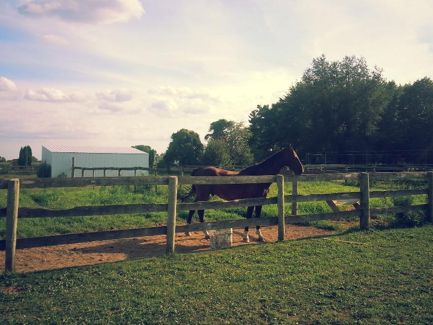 #horseranch