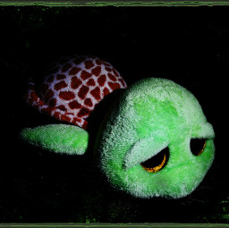 closeup longexposure stuffedtoy turtle cute