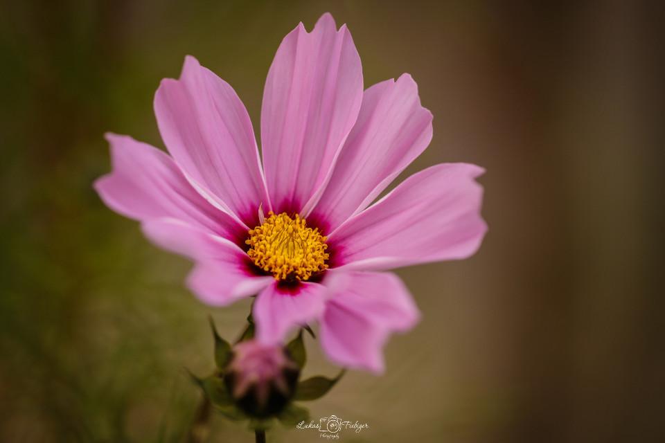 #flower #shine #colourful #blume #makro #canon #ef100mm #naturephotography #nature #naturfotografie #farbenpracht #shine #interesting #photoshop #lightroom