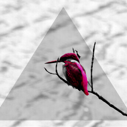 colorsplash freetoedit hdr nature photography