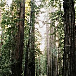 californiaredwoods woods trees roadtripping