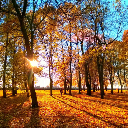 wppfallcolors tree leaves sunset autumn