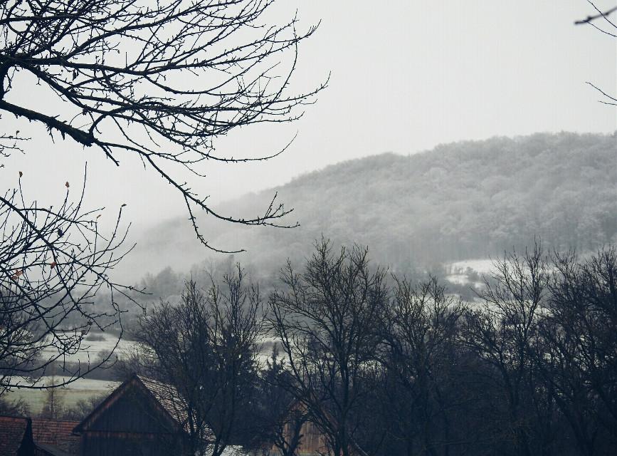 My view today. #landscape #fog #rainandsnow