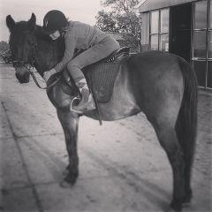 horse animal love cute blackandwhite