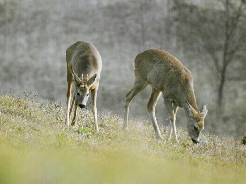 #wildlife  #nature  #myshotnotfromweb