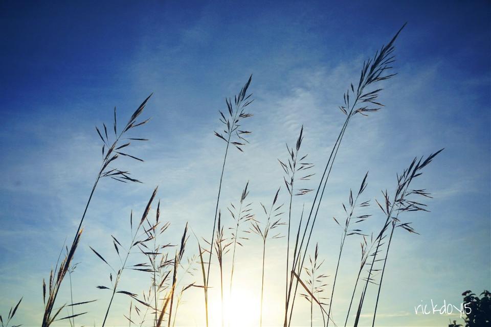 #nature #photography  #sky #sun