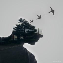 freetoedit exposure freedom filmeffect dodger art artistic clipart free nature tree illusion