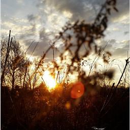 naturallensflare sunset nofilter nature intothesun