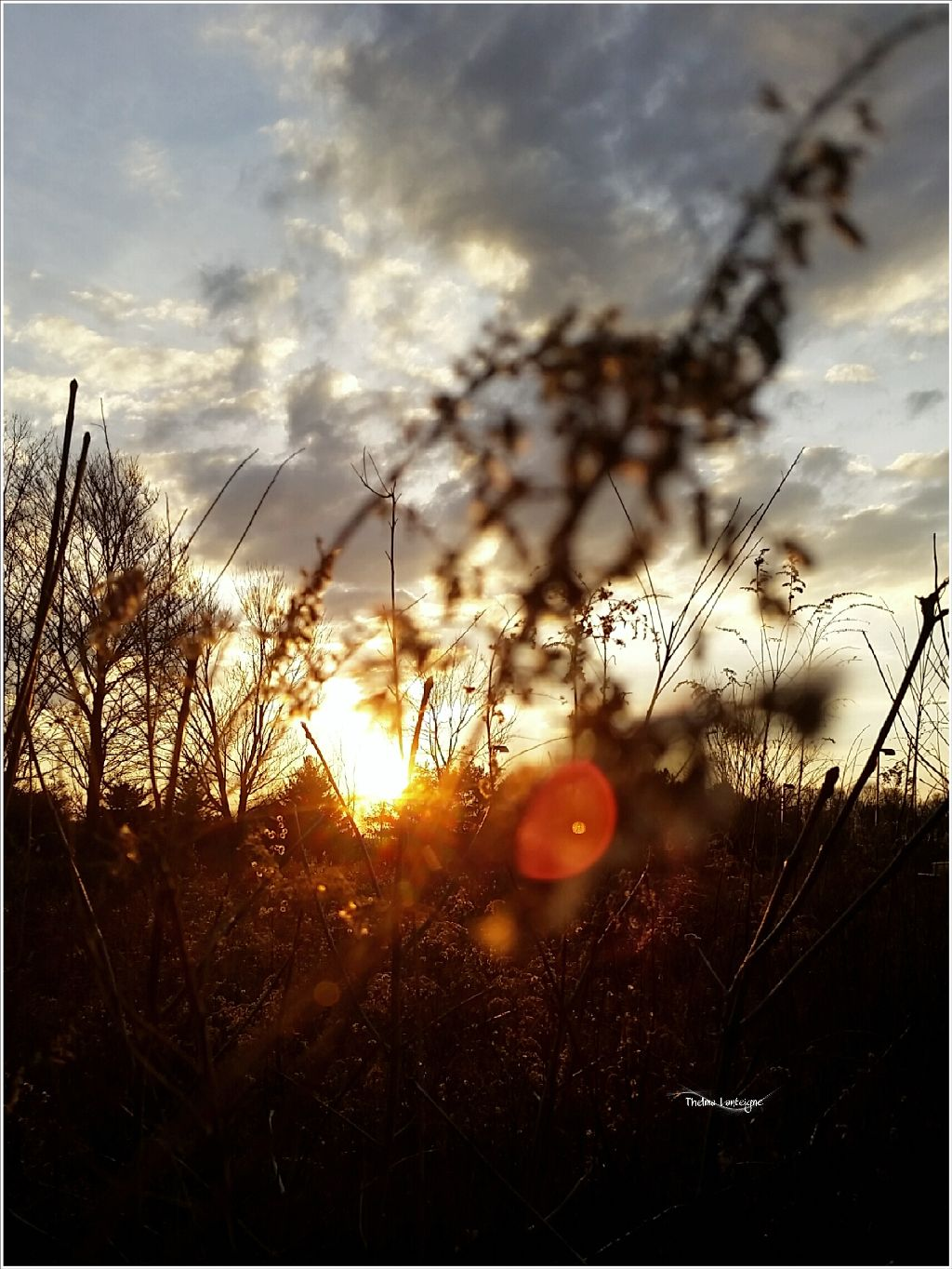 Good morning. Even in weeds there is beauty. #naturallensflare   #sunset #nofilter #nature #intothesun natural #lensflare #sky #clouds #border