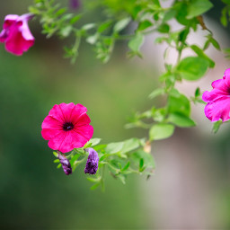 wildflowers nature pink green