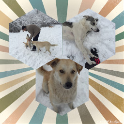 collage mansbestfriend dogs photography
