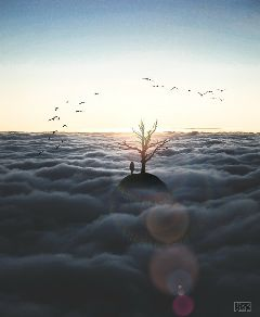 freetoedit nature tree people alone