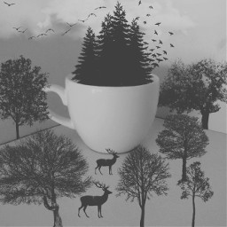blackandwhite forest surreal