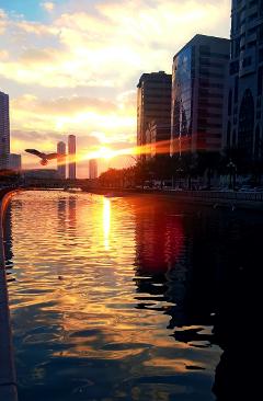 sunset sky water beautiful bird