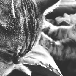 silence winter cats cat warm