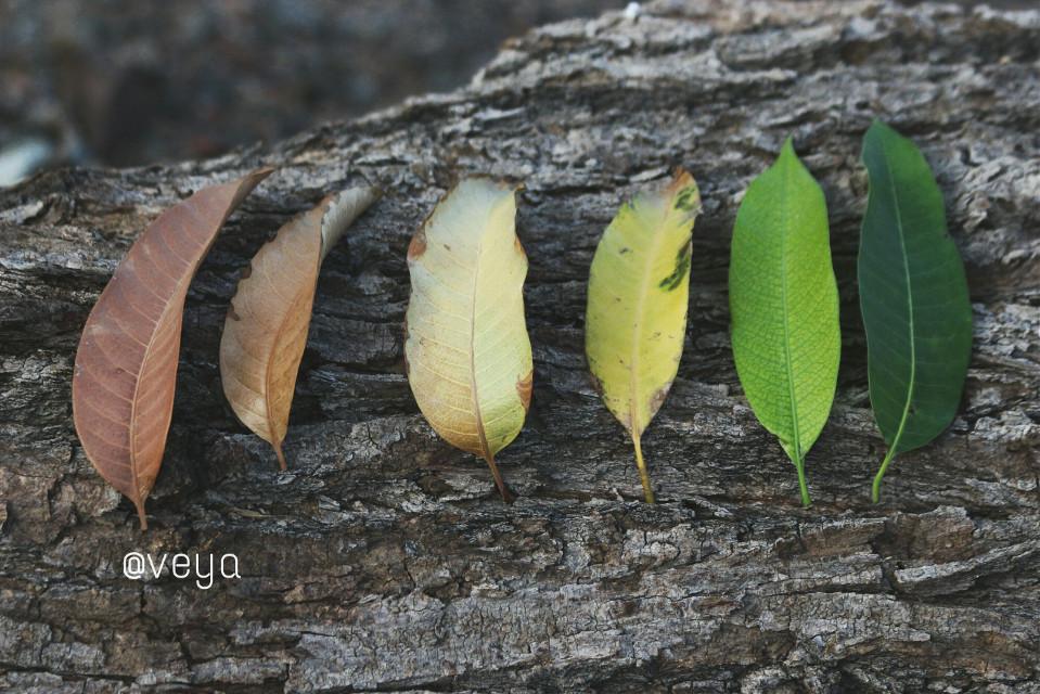 #mypic #تصويري  اللــحَـظـآت الــجَــمِــيــلــة .. كـ ـأوْرآق الــخــريــف .. تــسْــقُــطْ مـــن أعْــمــآرنــآ .. دون أَن تَـــــعُـــــود. #canon #nature #photography  #autumn