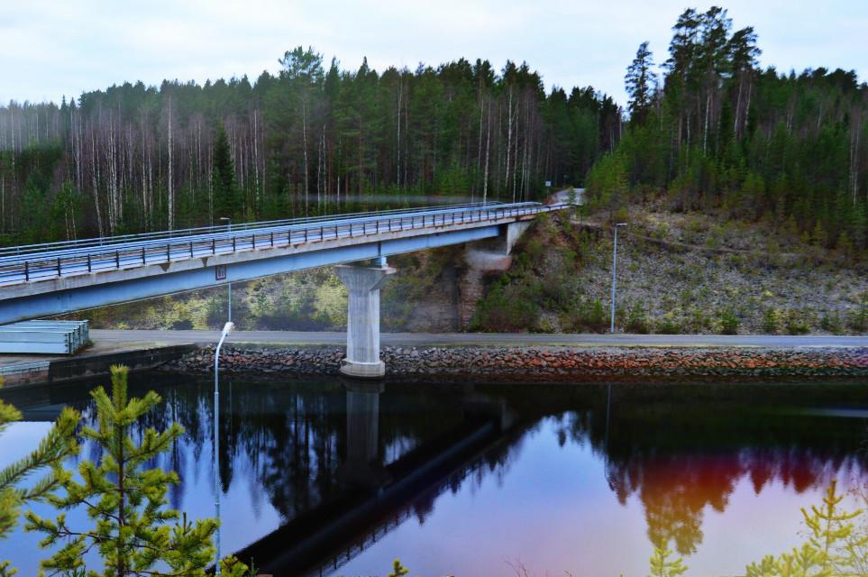 x  #oldphoto #tree #bridge #nature