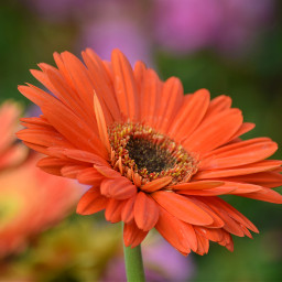 colorful colorsplash bokeh freetoedit flower