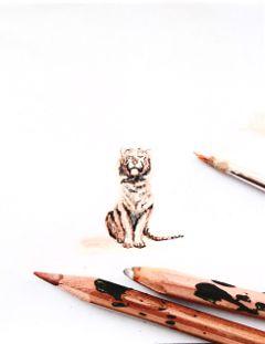 keepitsimple tiger majestic feline cat