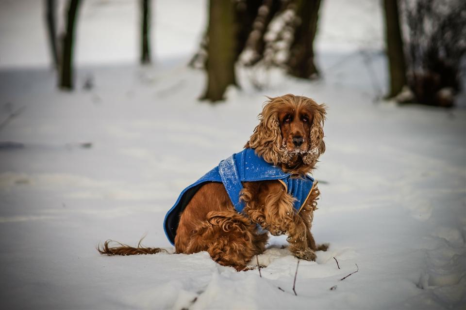 Damn snow #bokeh #cute #petsandanimals #photography #snow #winter