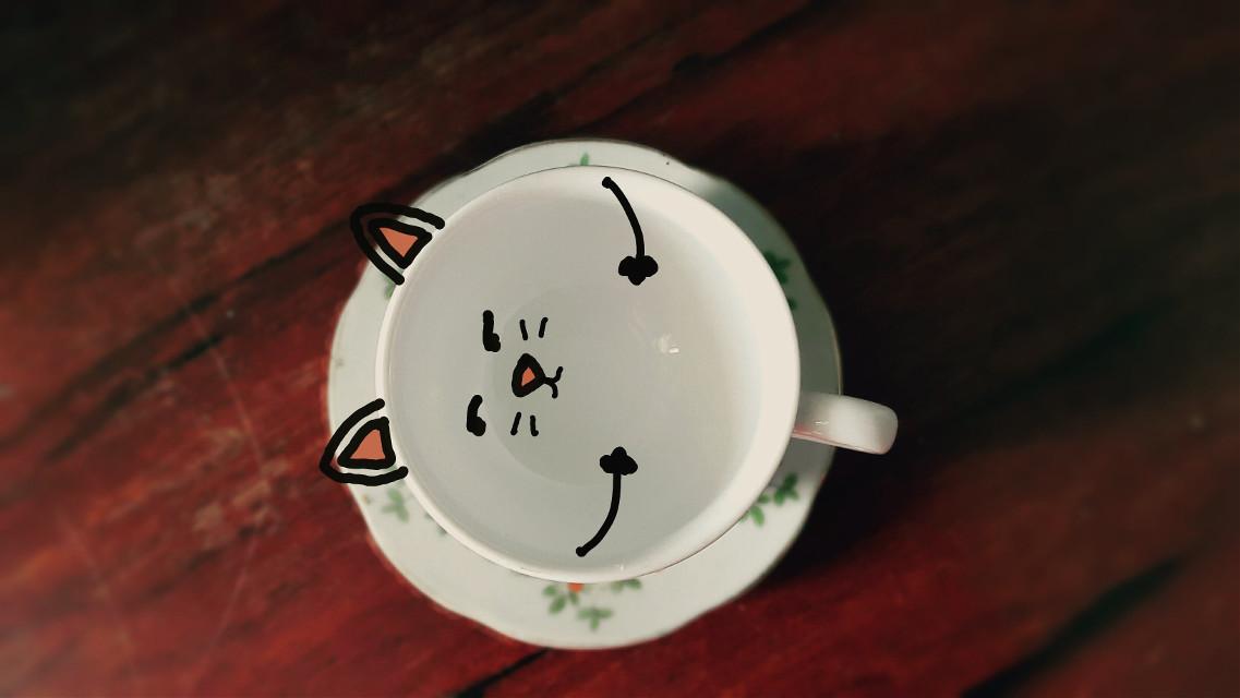 #cup  #cat
