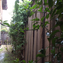 morning persepective calm vines