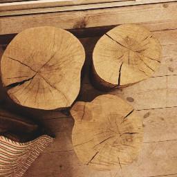 wood tree 3 nature