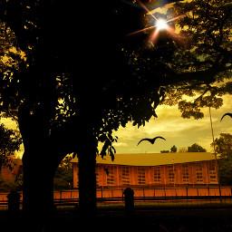 myshot nature sunset photography tree