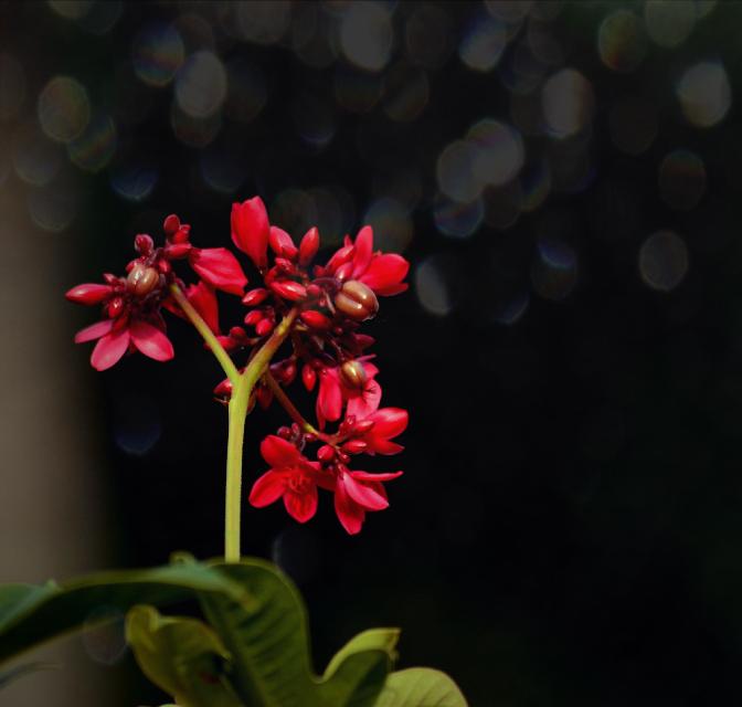 "#nature#bokeh""red#flower#tropic#travel"