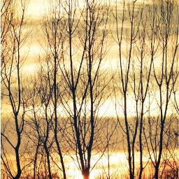 freetoedit nature photography sunset trees