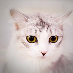 cat home omanpics noor_omani95 omani_tag