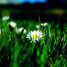 rays paid flowers emotions dailyinspiration
