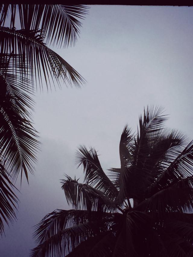#freetoedit #still #palmtrees
