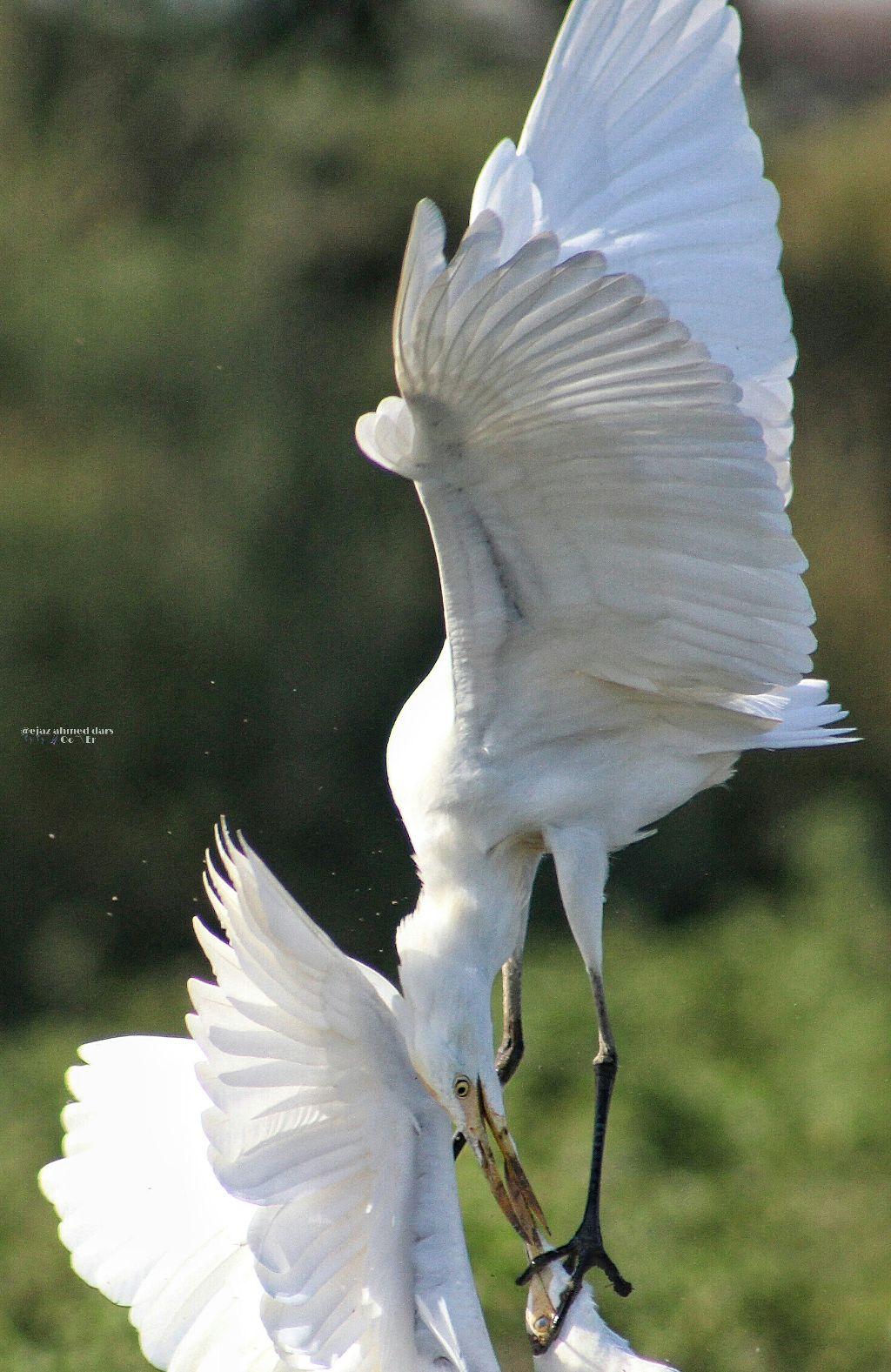 #nature #photography #love #music #freetoedit