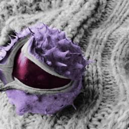 wappurplehue purple recolored colored recolor