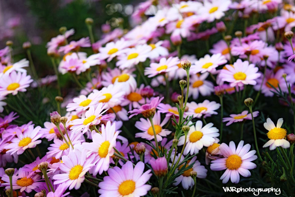 #interesting #art #birthday #california #italy #japan       #france #nature #music #people #photography #summer #beautiful #pretty #flowerarrangement #flowers #pink