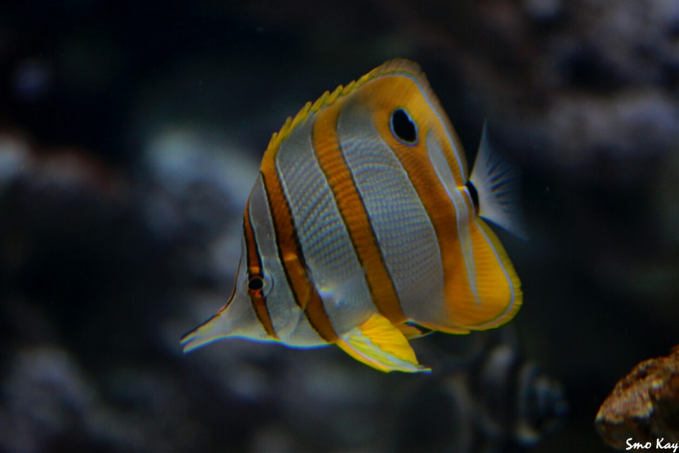 #underwater #fish #photography #nature #petsandanimals #animals #zoo #cute #colorful