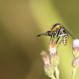 bongkok photography love macro insect