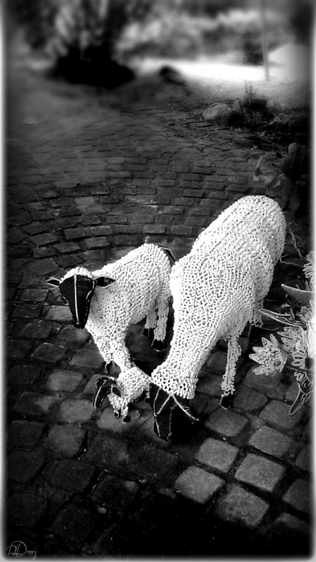 #blackandwhite #photography #ornament #beads #Hogsback #SouthAfrica  Sheep made of wire and beads photographed at Hogsback at its annual Christmas in July flee market